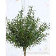 Plastik Asparagus sprengeri FREDERICK, Steckstab, 25cm