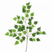 Künstlicher Birkenzweig NIKOLAJ, grün, 70cm