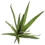 Kunst Aloe Vera VERENA, Steckstab, crossdoor, grün, 50cm, Ø40cm