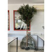 B-Ware Kunst Olivenbaum NIKOLAS, Naturstamm, mit Früchten, 210cm