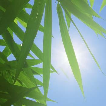 UV sichere Kunstpflanzen